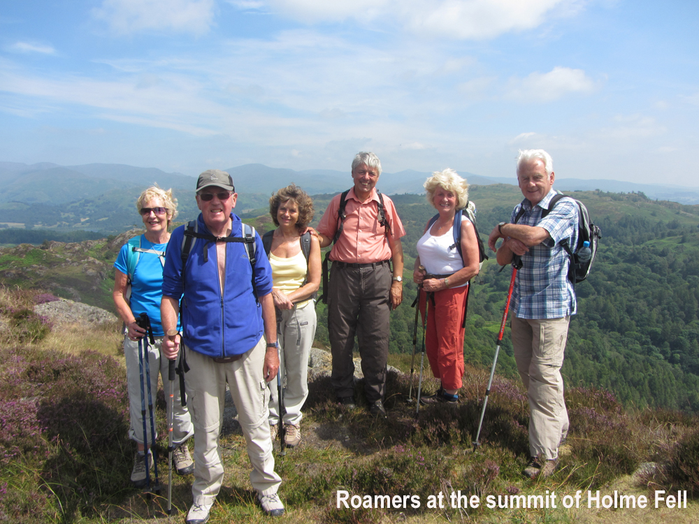 Roamers on Holme Fell in Cumbria pic