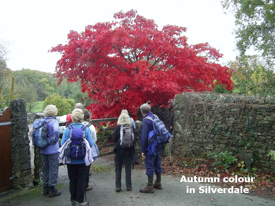 red tree at silverdale pic